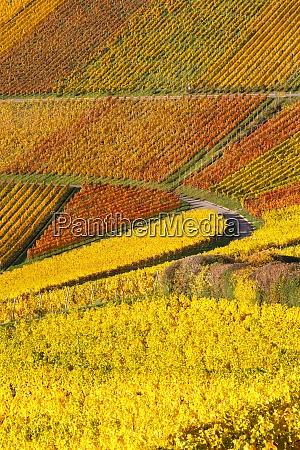 vineyards wine autumn fall season colorful