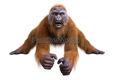 3d rendering orangutan on white
