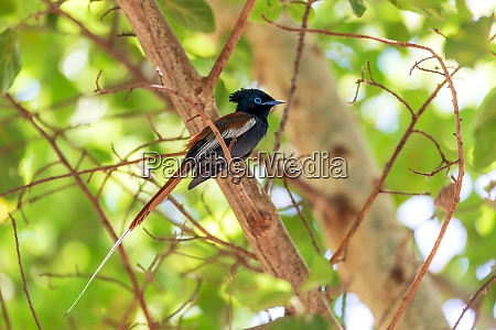 beautiful colored small bird african paradise