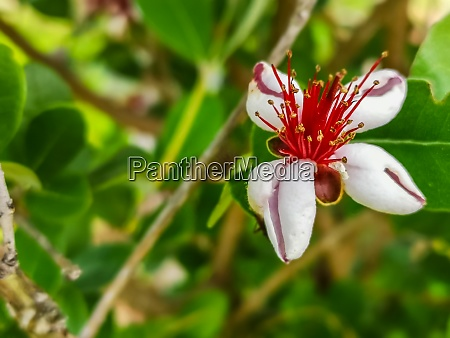 beautiful white red blossom in the