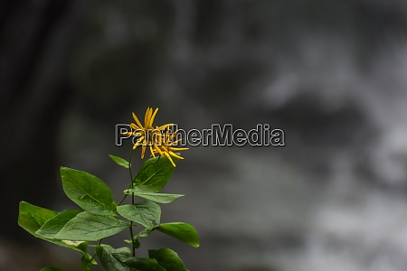 little delicate green yellow flower with