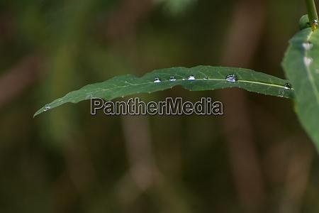 raindrops on a green leaf makro