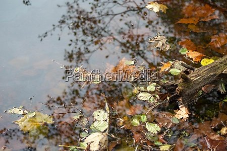 autumn waters edge still life