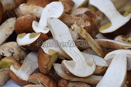 porcini edible mushrooms at retail display