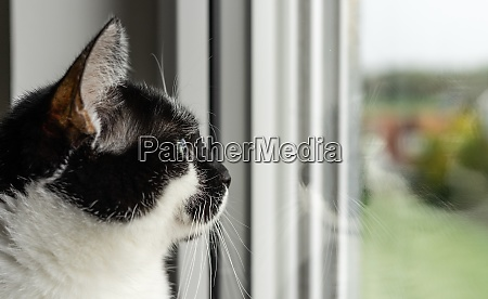 female black and white cat closeup