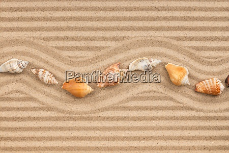 row of seashell lying on the