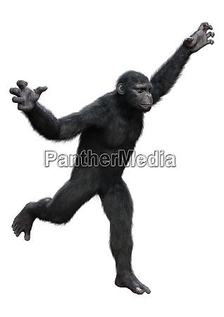 3d rendering chimpanzee on white