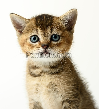 portrait of a cute kitten of