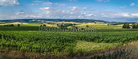 panorama with cornfields