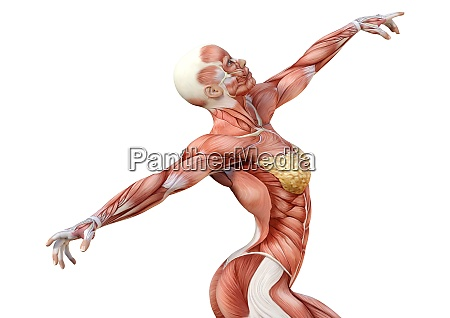3d rendering female anatomy figure on