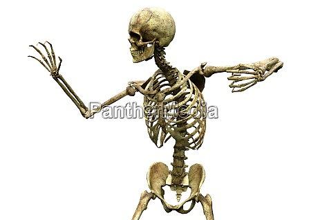 3d rendering human skeleton on white