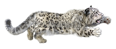 3d rendering snow leopard on white