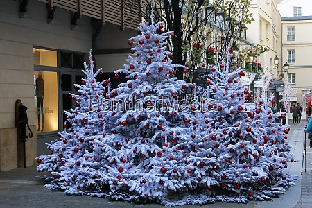 christmas tree on the streets of