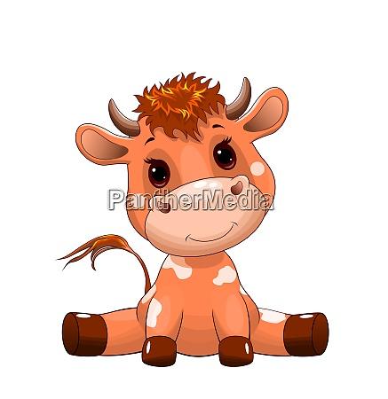cute bull calf