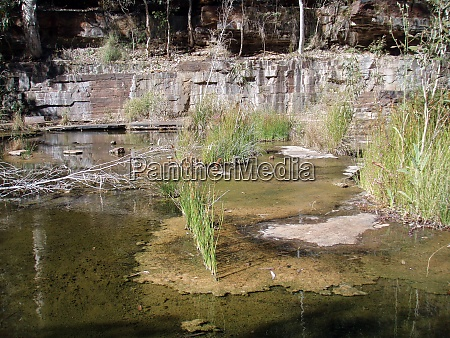 garden pond and the design of
