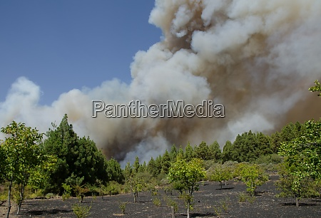 forest fire in the nublo rural