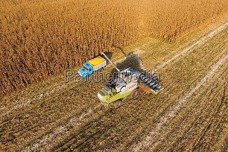 combine harvester pours corn grain into
