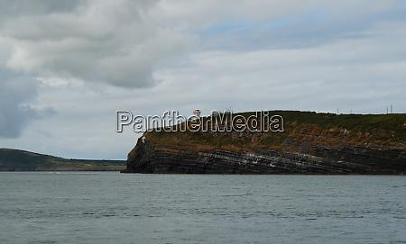 coast dolphin tour carrigaholt