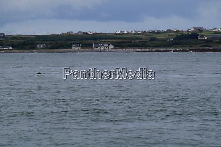 dolphin tour carrigaholt