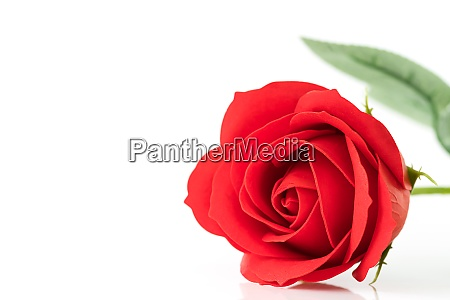 single red plastic fake roses on