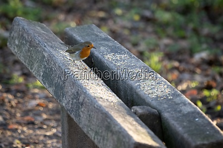 robin perched on a wooden bench