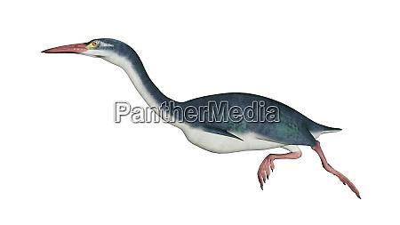 hesperornis prehistoric bird 3d render