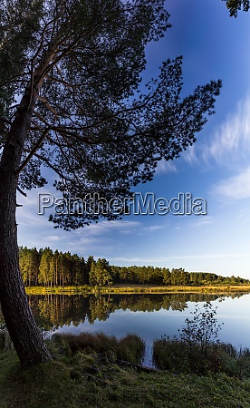 lakes in autumn forest forest autumn