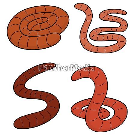 vector set of worm