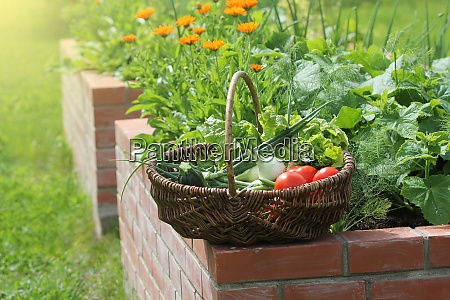 basket with vegetables raised beds gardening