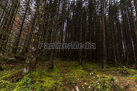 forest with beautiful green moss on