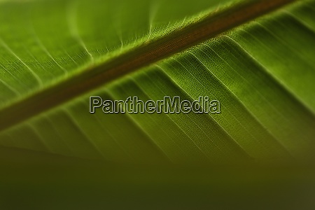 close up veins in green tropical