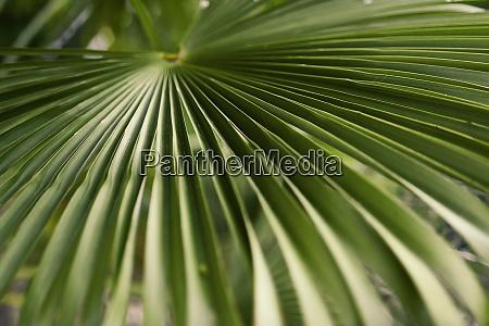 close up green palm leaf pattern