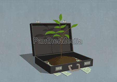 money and growing sapling inside business