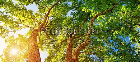 tree foliage in morning light