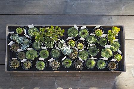 small succulent plants in flowerpots in