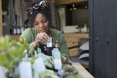 female shop owner arranging succulent display