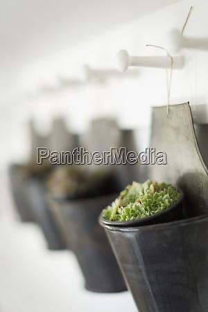 close up succulent plant hanging in