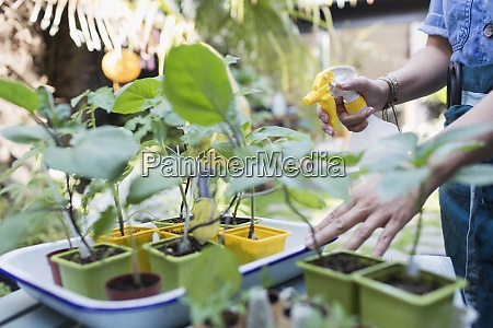 woman watering potted plants with spray