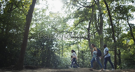 family hiking in sunny summer woods