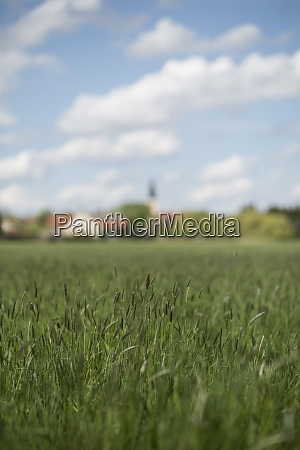 germany brandenburg meadow