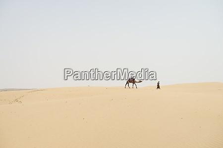 man leading camel through desert