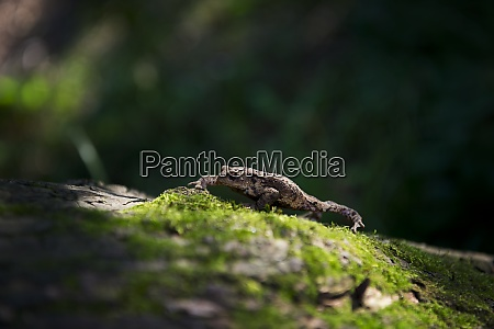 toad bufonidae on a mossy surface