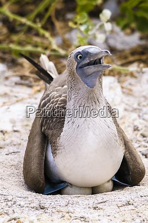 ecuador galapagos islands san cristobal blue