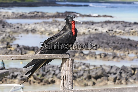 ecuador galapagos islands santa cruz magnificent