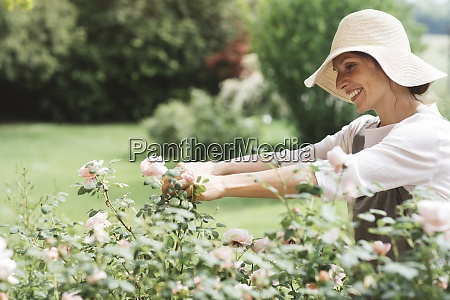 smiling woman picking roses in garden