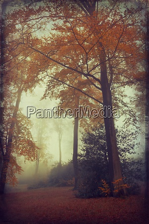 view to foggy autumn forest