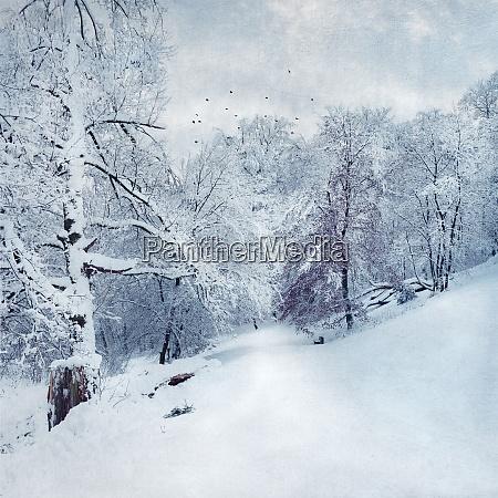 germany near wuppertal winter landscape textured