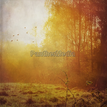 forest and meadow at backlight