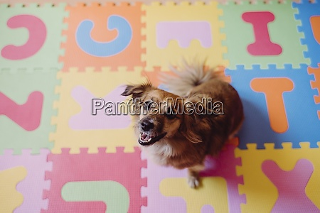 cute dog sitting on colorful puzzle