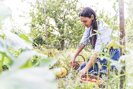 woman harvesting fresh organically grown vegetables